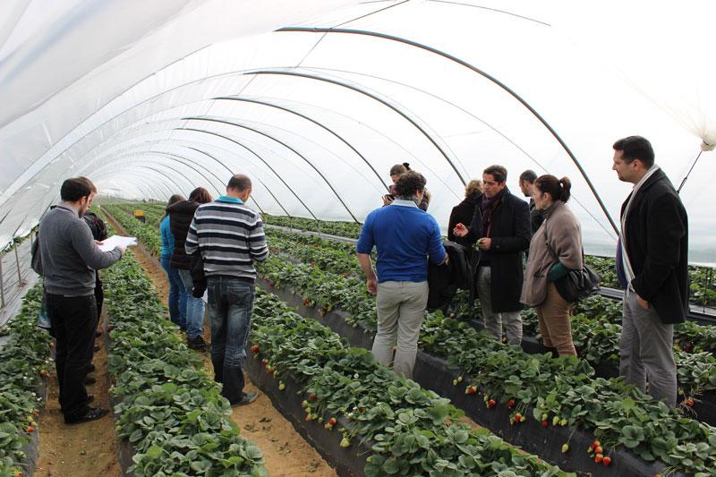 La asociación de productores franceses conoce la fresa de Huelva