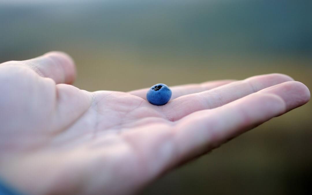 Los arándanos azules ayudan a controlar la presión arterial en las mujeres