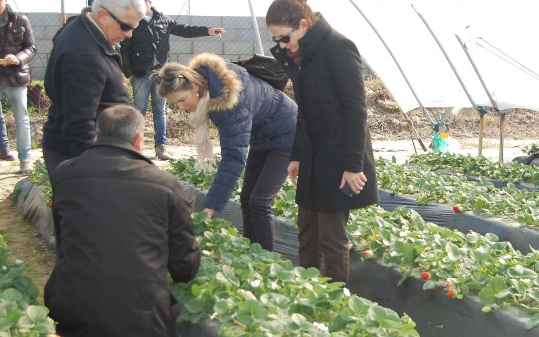 Productores de fresa de Francia, Italia y España analizan la campaña y la colaboración en el ámbito fitosanitario