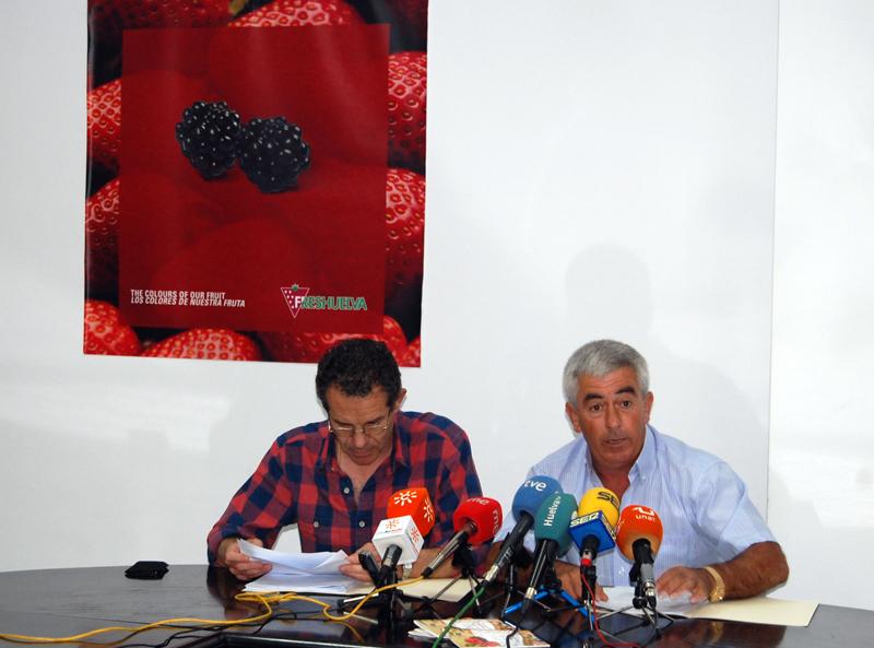 Freshuelva culmina la campaña con una producción de 302.600 toneladas de fresa y un aumento del 19%