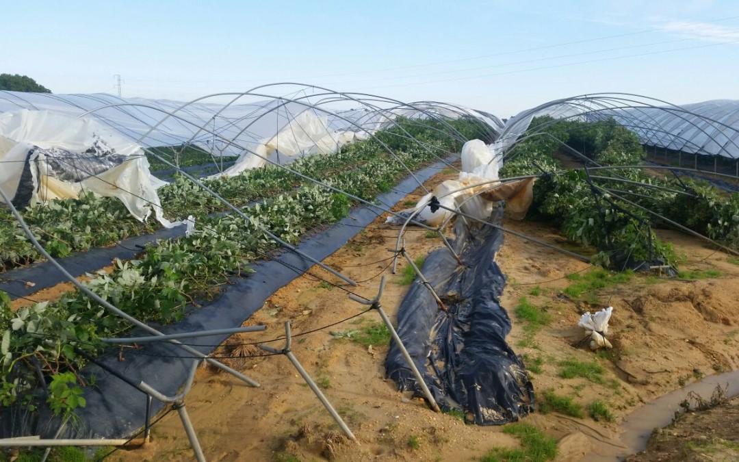 El temporal provoca daños en cultivos de berries de Palos de la Frontera