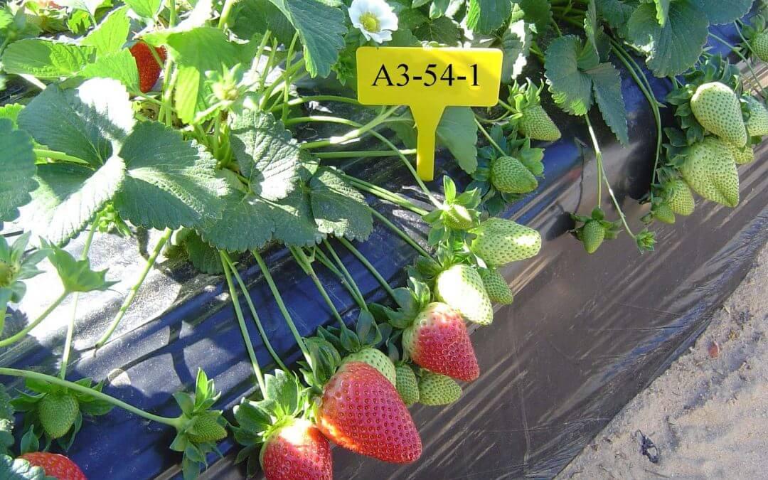 Freshuelva se adhiere a la Plataforma Europea de Especialización Inteligente en Agroalimentación