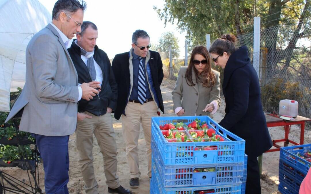 Productores de fresas de Francia, Italia y España analizan la campaña y la colaboración en el ámbito fitosanitario