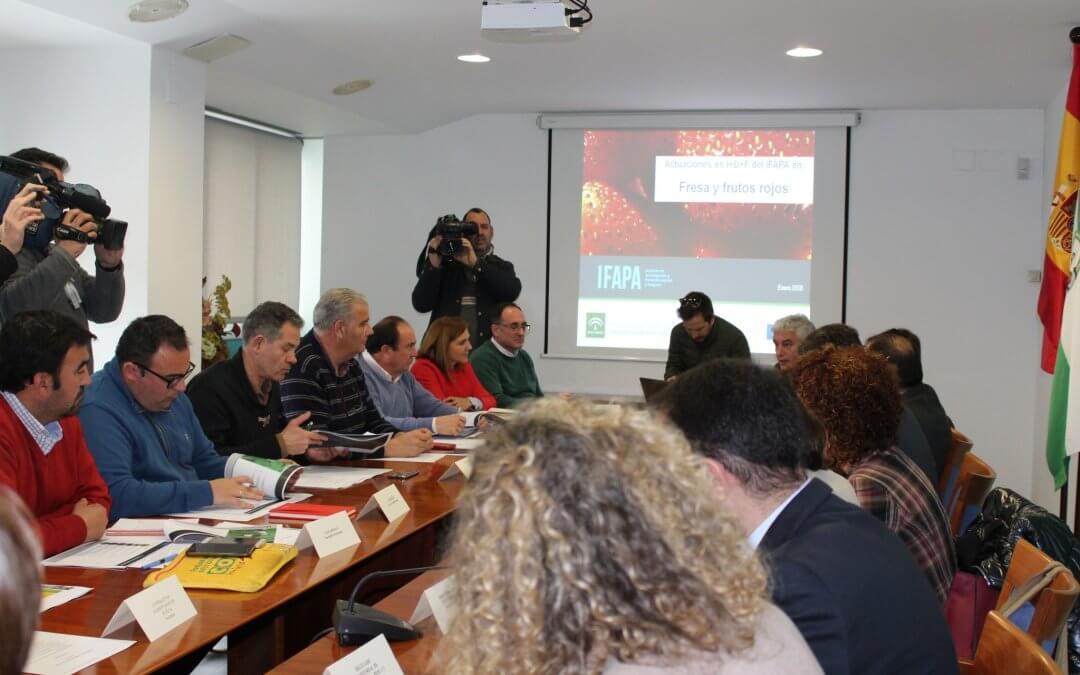 La Mesa de los Frutos Rojos aborda la situación de la campaña de la fresa