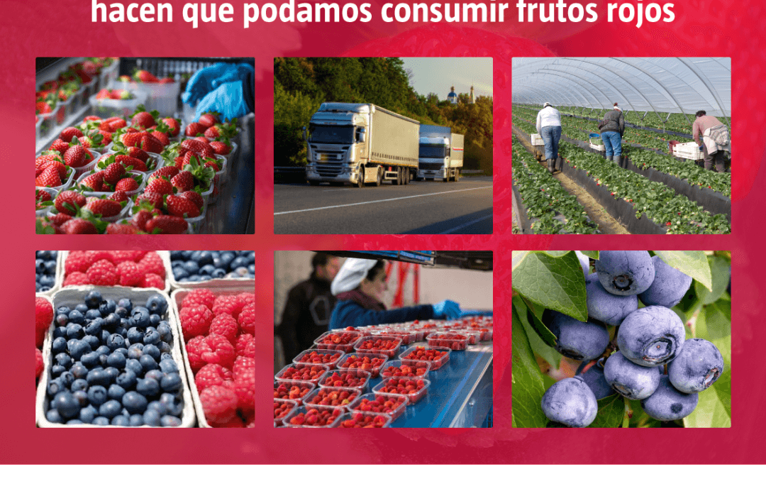Freshuelva aplaude el compromiso y la responsabilidad de los trabajadores del sector de los berries
