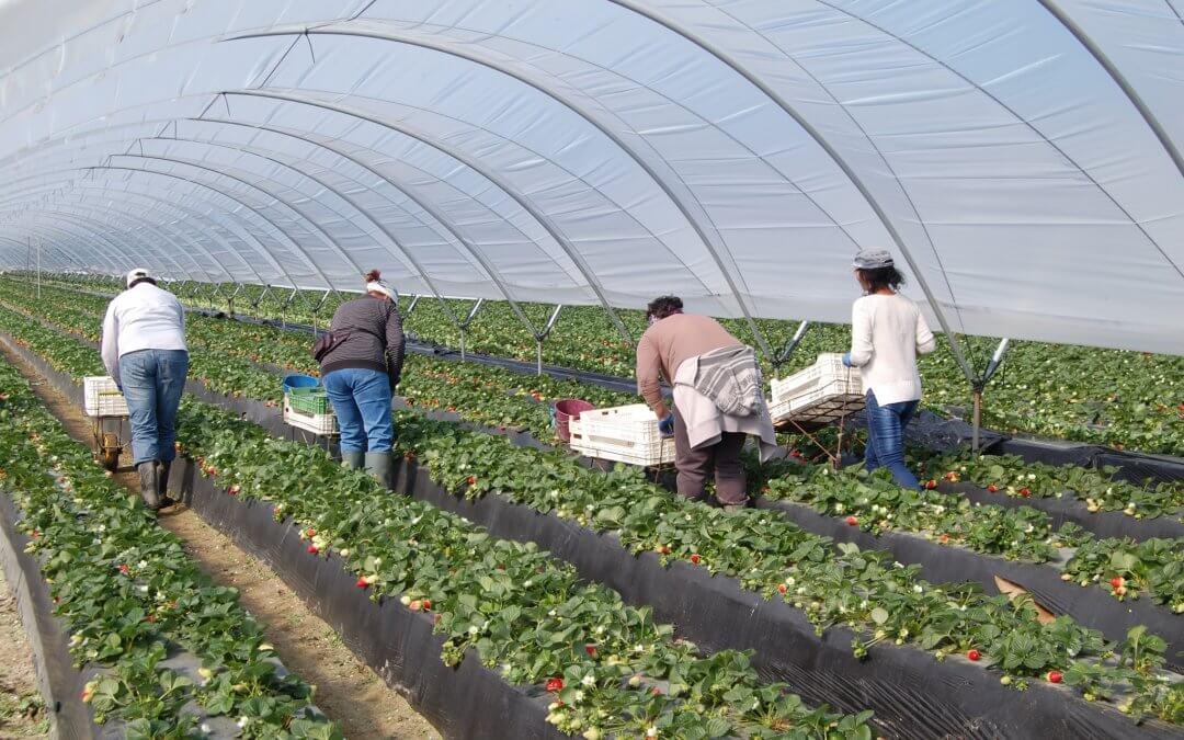 Renovado el convenio que ordena los flujos migratorios laborales de temporada entre el Ministerio de Seguridad Social y el sector agrario