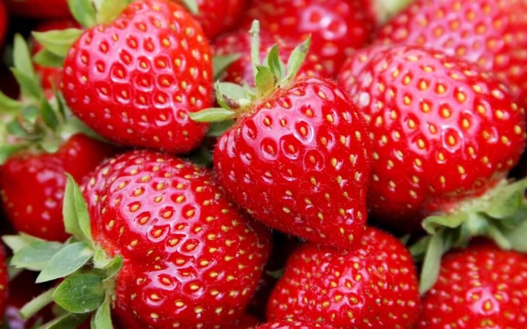 El Ministerio de Agricultura comunica a Freshuelva la apertura del mercado canadiense para la exportación de fresas españolas
