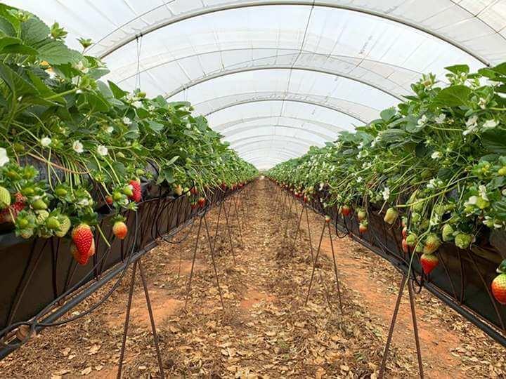 Freshuelva reclama la inclusión de los frutos rojos en el Plan de Recuperación y Resiliencia del Gobierno